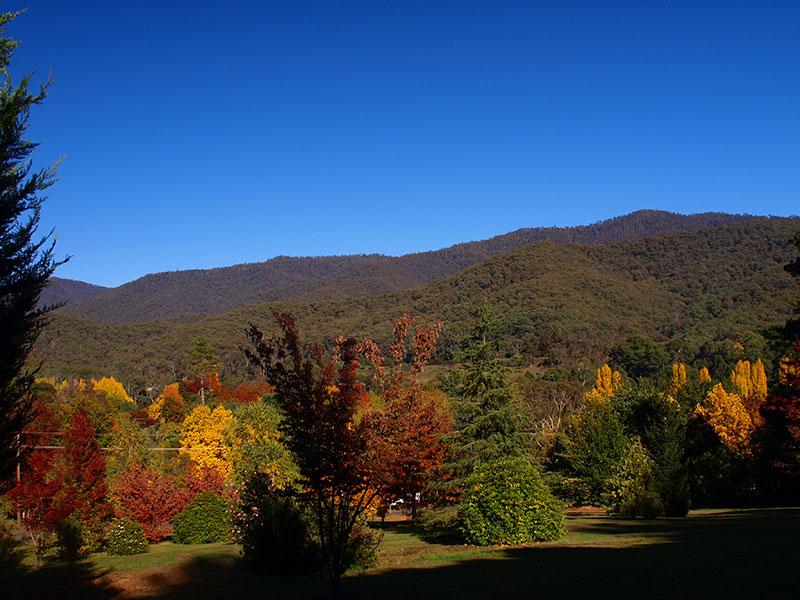 Jamieson arboretum