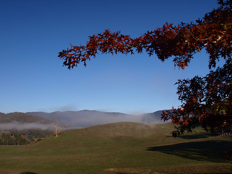 Mist in the Jamieson Valley
